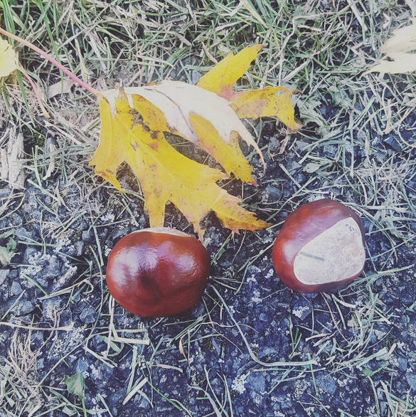 Conkers, Autumn, Walk, Leaves