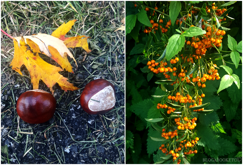 Conkers, Orange, Berries, Autumn, Seasons, Blog A Book Etc, Fay