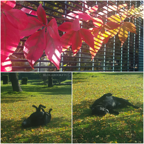 Dogs, Labrador, Black Labrador, Autumn, Seasons, Blog A Book Etc, Fay