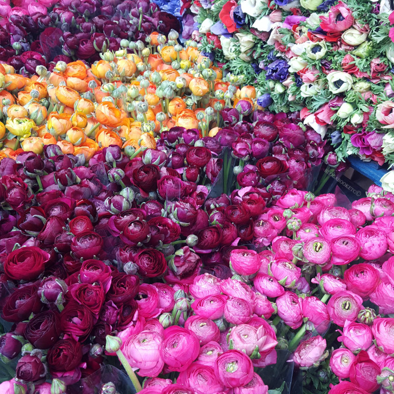 Peonies, Tulips, Dutch Tulips, Easter Weekend, Easter, Bank Holiday, Flowers, Flower Market, Spring, Happy Easter, Blog A Book Etc, Fay