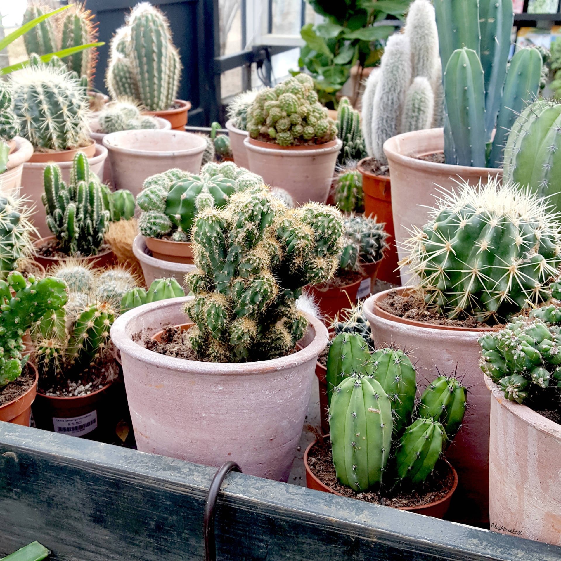 Petersham Nurseries, Petersham, Richmond, London, Surrey, Flowers, Plants, Succulents, Cacti, Cactus, Bedding Plants, Nurseries, Garden, Gardening, Summer, Beautiful, Beauty, Blogger, Life, Lifestyle, Blog A Book Etc, Fay